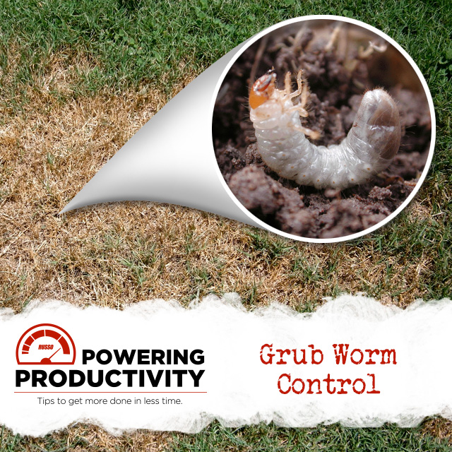 enlarged view of a grub worm
