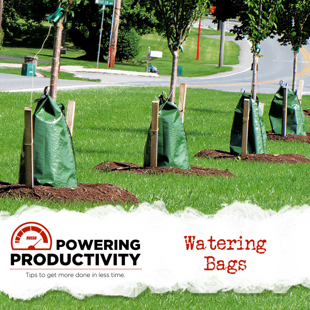 watering bags slowly hydrating young, freshly planted trees